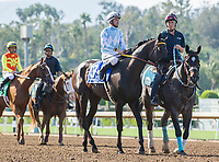 ARCADIA, CA APRIL 22:  #3 Prospect Park ridden by Flavien Prat, in the post parade of the the Californian Stakes (Grade ll) on April 22, 2017 at Santa Anita Park in Arcadia, CA.(Photo by Casey Phillips/Eclipse Sportswire/Getty Images)
