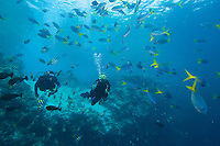 Divers (MR) and reef fish.  Palau, Micronesia.