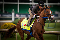 LOUISVILLE, KY - MAY 03: Hence gallops at Churchill Downs on May 03, 2017 in Louisville, Kentucky. (Photo by Alex Evers/Eclipse Sportswire/Getty Images)