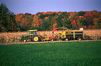 A tractor harvests corn in autumn. farming, equipment, machinery, tractors, agriculture, crop, crops, harvest. Wisconsin.