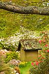 Ramsey Rock Garden and Meerkerk Rhododendron Garden, Whidbey Island, WA. Birdhouse