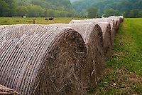 Rolled hay in pasture, Washington County