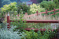 Wooden rail fence in garden border with ornamental grass Calamagrostis x acutiflora 'Karl Foerster'