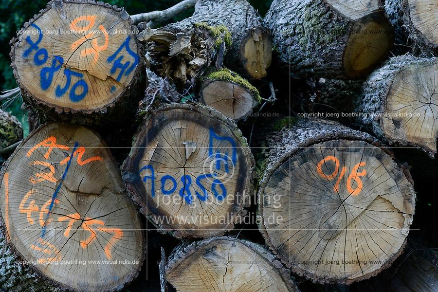 GERMANY, Teterow, forest / Wald, Forstwirtschaft, gefällte Laubbäume, Eiche mit Markierung