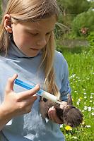 Marderhund, verwaistes Jungtier wird in menschlicher Obhut großgezogen, Mädchen, Kind füttert Tierkind aus einer Spritze mit Spezial-Aufzuchtsmilch, Marder-Hund, Enok, Seefuchs, Tierbabies, Tierbabys, Tierbaby, Nyctereutes procyonoides, raccoon dog, Chien viverrin