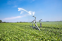 Irrigating beet root wth a Grimme reel and raingun - Cambridgeshire, July