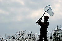 A young boy waits patiently as he attempts to catch dragon flies landing in the tall grass