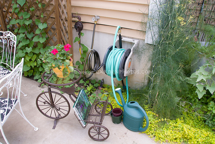 Sweet antique tricycle bicycle as plant stand with container of geranium flowers. Watering hose hanger and winder, fennel herb, Lysimachia groundcover, house, watering can, Ipomoea vine on lattice trellis, patio with furniture next to house.