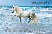 Bob, ANIMALS, collage, horses, photos(GBLASEA0608,#A#) Pferde, caballos