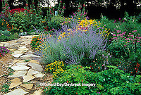 63821-09509 Rock Path in flower garden with Columbines (Aquilegia sp.), Russian Sage (Perovskia atriplicifolia), Cigar Plant (Cuphea ignea), Red & Pink Bee Balm (Monarda didyma), Hollyhocks (Alcea rosea), Angelonia Angel Mist (Angelonia angustifolia), Million Gold Melampodium (Melampodium sp.), Indian Summer Black-eyed Susans (Rudbeckia hirta)  Marion Co.  IL