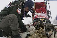 Volunteer veterinarian Roger Troutman checks through Doug Swingley's team at Nikolai.
