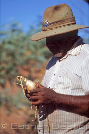 Aboriginal man showing an edible root. Harts Range, Northen Territory.