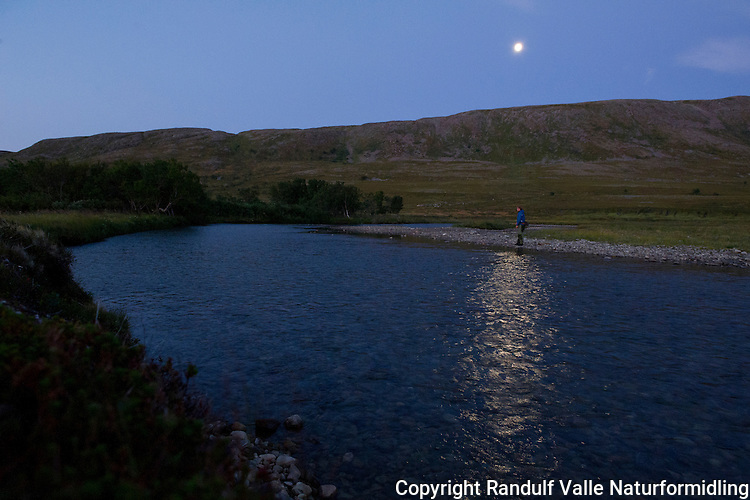 Mann fisker i Tømmervikelva en sensommernatt. ---- Man fishing Tømmervikelva a summer night.