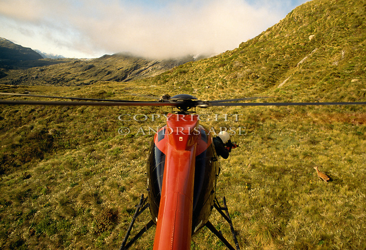 Helicopter hunting for deer. Fiordland National Park, New Zealand