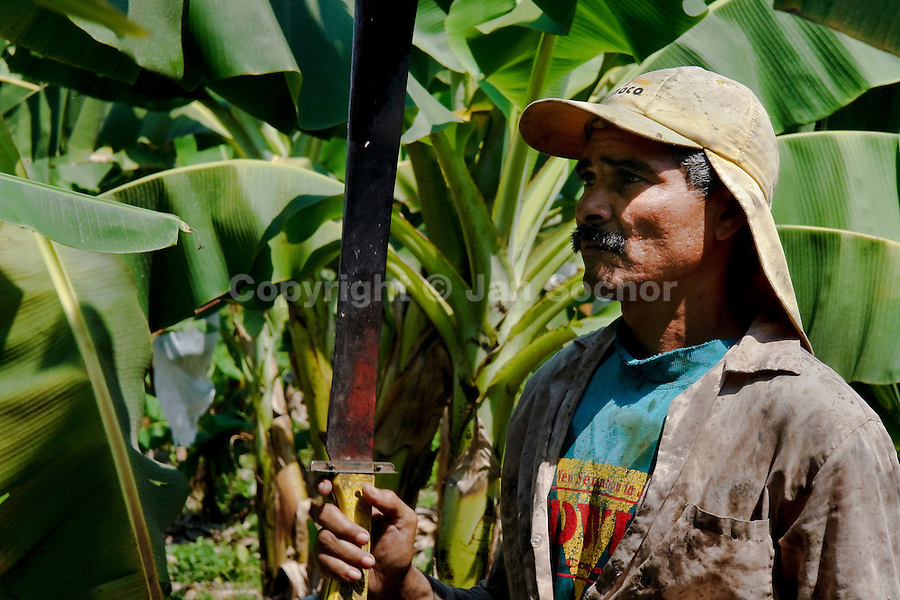 A Colombian worker with machete on the banana plantation in Aracataca, Colombia, 14 March 2006. Eighty percent of the exported bananas in the world are grown in Latin America. Local farms have no other alternative than to sell for a price offered by the multinational company. When working conditions and ecology is in question, the corporations do not have any responsibility as they do not own plantations. Local governments in the attempt of organizing banana export provide low duty taxes on export, they try to eliminate social and enviromental politics to attract the big companies to their countries.