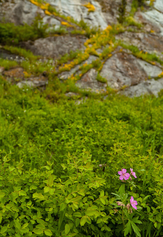 A small cluster of purple flowers is nestled in a sea of green foliage.