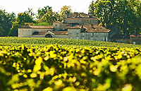 The back side of Chateau Figeac in Saint Emilion, Bordeaux with vineyard in the foreground