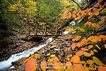 A footbridge along an autumn stream in Ricketts Glen State Park, Pennsylvania