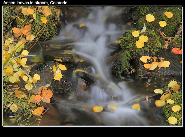 "Autumn aspen leaves and stream. From John's 3rd book ""Mastering Nature Photography"".<br />
