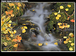 Autumn aspen leaves and stream. From John's 3rd book &quot;Mastering Nature Photography&quot;.<br />