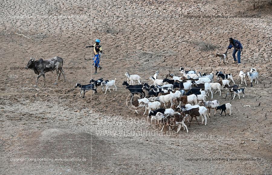 BURKINA FASO, Kaya, cattle herder with goats search for water / Tierherde in einem trockenem Flussbett