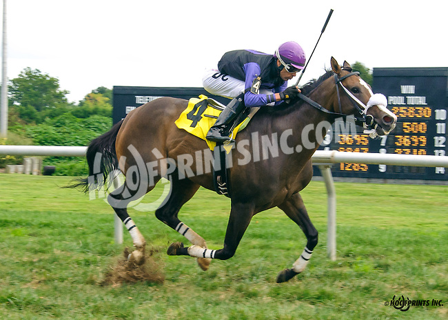 Yankee Wildcat winning at Delaware Park on 9/2/16