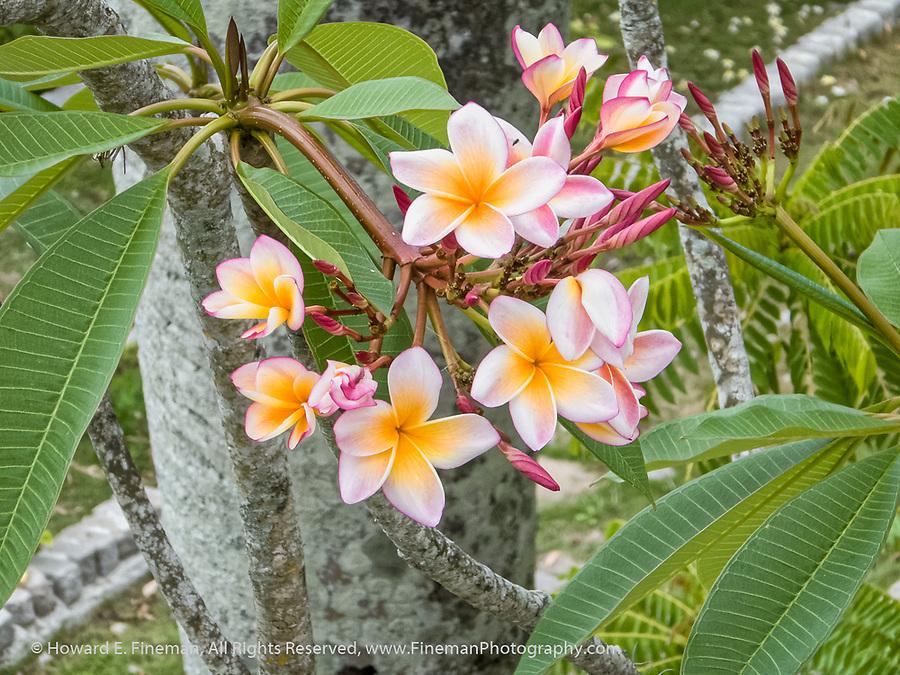 Flowering tree outside Hemingway's writing room