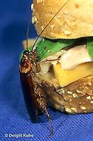 OR13-019c   American Cockroach eating sandwich - Periplaneta americana