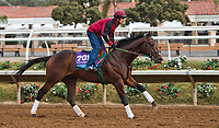 DEL MAR, CA - OCTOBER 02: Bolt d'Oro, owned by Ruis Racing LLC and trained by Mick Ruis, exercises in preparation for Sentient Jet Breeders' Cup Juvenile at Del Mar Thoroughbred Club on November 2, 2017 in Del Mar, California. (Photo by Anna Purdy/Eclipse Sportswire/Breeders Cup)