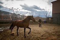 Preparacion caballos Luminarias