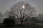 Sun shining through branches of tree winter