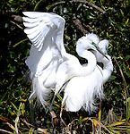 NZ16 Heron Nesting site