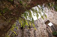Mount Healthy National Park Ruins<br /> Tortola, BVI
