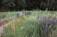 Bench by path in sand hill prairie meadow with Prairie Sandreed (Calamovilfa longifolia), Amorpha canescens (leadplant), Artemesia frigida, and Ratibida at Denver Botanic Garden