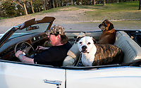 "When Frank Alexander, of Courtright goes for a ride his two dogs are right behind him. ""They own the car,"" he explained while driving through Canatara Park on a balmy spring night. Gemma, a white and tan American terrier and Bosco, a bullmastiff ride in the back seat of his classic 1973 Cadillac Eldorado."
