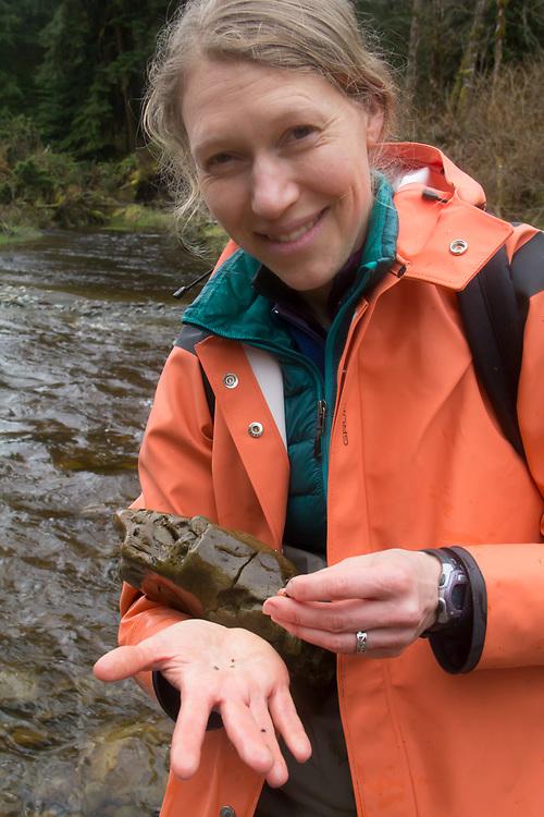 Hoh River, Hoh River Trust, The Nature Conservancy, TNC, fresh water invertebrates, Emily Howe, Marine Biologist, assessing river habitat, Noland Creek, spring, 2017 Olympic Peninsula, Washington State, Pacific Northwest, USA,