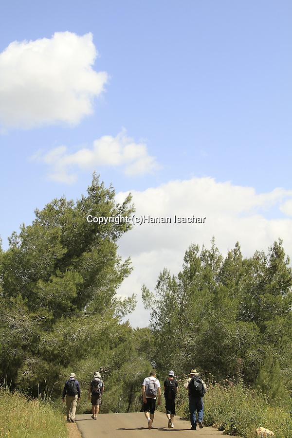 Israel, Lower Galilee, Jesus trail at Bet Keshet forest