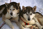 Huskies taking break
