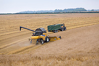 Harvesting winter barley with New Holland combines - Lincolnshire Wolds; July
