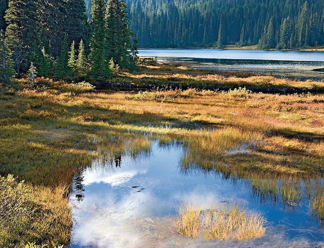 Warm Autumn Afternoon Light on Reflection Lake, Mt Rainier National Park, Washington State