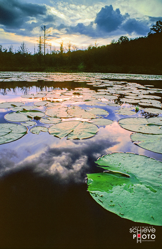 Lily pads at sunset on English Lake in northern Wisconsin.