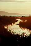 Wetlands, Skagit Estuary, Puget Sound, Olympic Mountains, Washington State, Skagit County, WSFW, WWRP, Critical Habitat,.