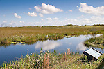 Taylor Slough, that runs along the Anhinga Trail, makes up part of the Everglades  ecosystem.