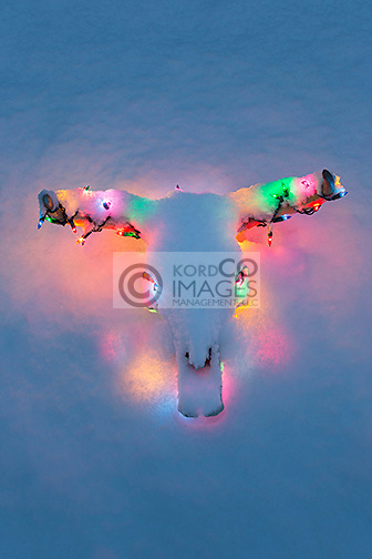 BLEACHED COW STEER SKULL HORNS DECORATED WITH MULTI COLORED CHRISTMAS LIGHTS UNDER A COATING OF SNOW