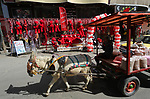 A Palestinian man rides a donkey cart past a shop selling red teddy bears, red ballons and pillows on Valentine's day in Gaza city on February 14, 2018. Valentine's Day is increasingly popular in the region as people have taken up the custom of giving flowers, cards, chocolates and gifts to sweethearts to celebrate the occasion. Photo by Ashraf Amra