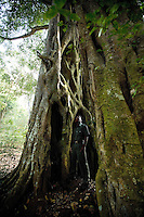 20080131_Periyar, India_ A massive Banyan Tree, in the Periyar Wildlife Sancuary in the Southern Indian state of Kerala.  Photographer: Daniel J. Groshong/Tayo Photo Group