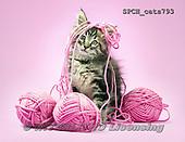 Xavier, ANIMALS, REALISTISCHE TIERE, ANIMALES REALISTICOS, cats, photos+++++,SPCHCATS793,#a#