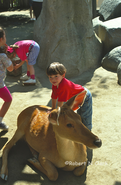 Boy at petting zoo