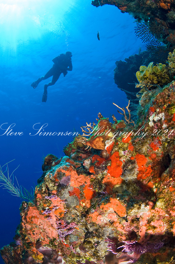 Yellow Reef, Isla Desedheo, dive site