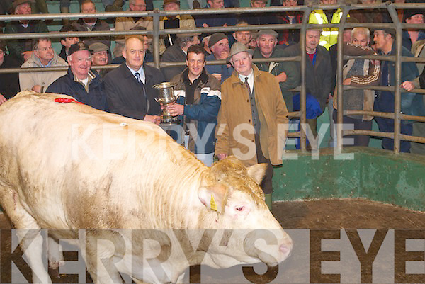 CHAMPION: John ODonoghue (Manager AIB Tralee, Sponsor) who presented the Champion Bullock Show & Sale Cup to Eugene Healy, Slieve, The Spa, Tralee, on Monday, 5th March, at Kingdom Co-operative Livestock Mart Ltd, Tralee. Also pictured are John Savage, Tralee, and Mike Hannon (Judge), on right..